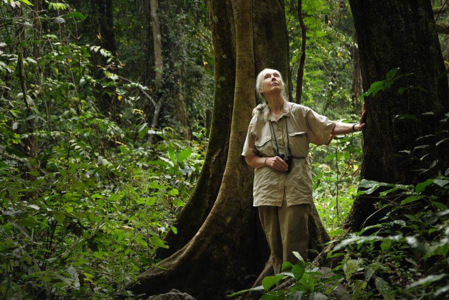 Jane Goodall in Gombe an einen Baum gelehnt