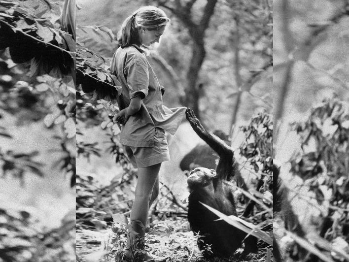 Schwarz-weiß Foto von Jane Goodall und jungem Schimpansen