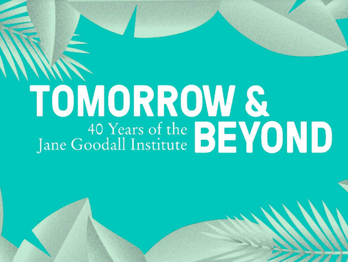 Logo Tomorrow & Beyond - 40 Jahre Jane Goodall Institut
