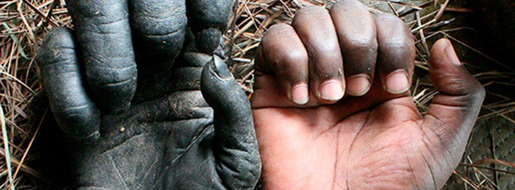 Menschenhand neben Hand eines Schimpansen