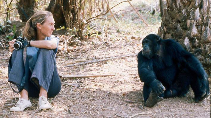 Jane Goodall gemeinsam mit David Greybeard