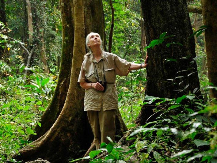 Jane Goodall berührt einen Baum im Regenwald