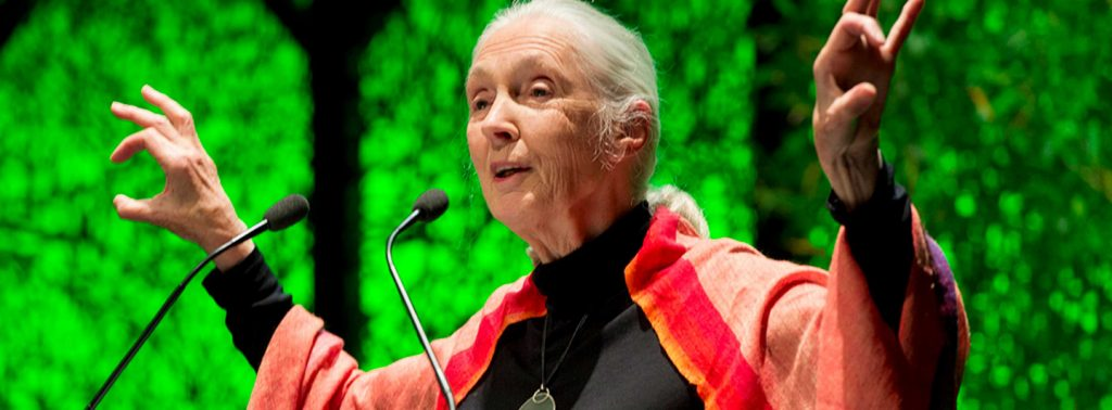 Jane Goodall hält Vortrag