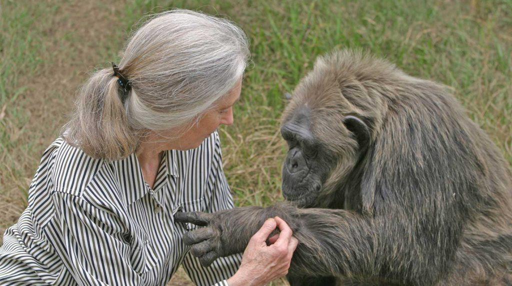 Jane Goodall mit La Vieille