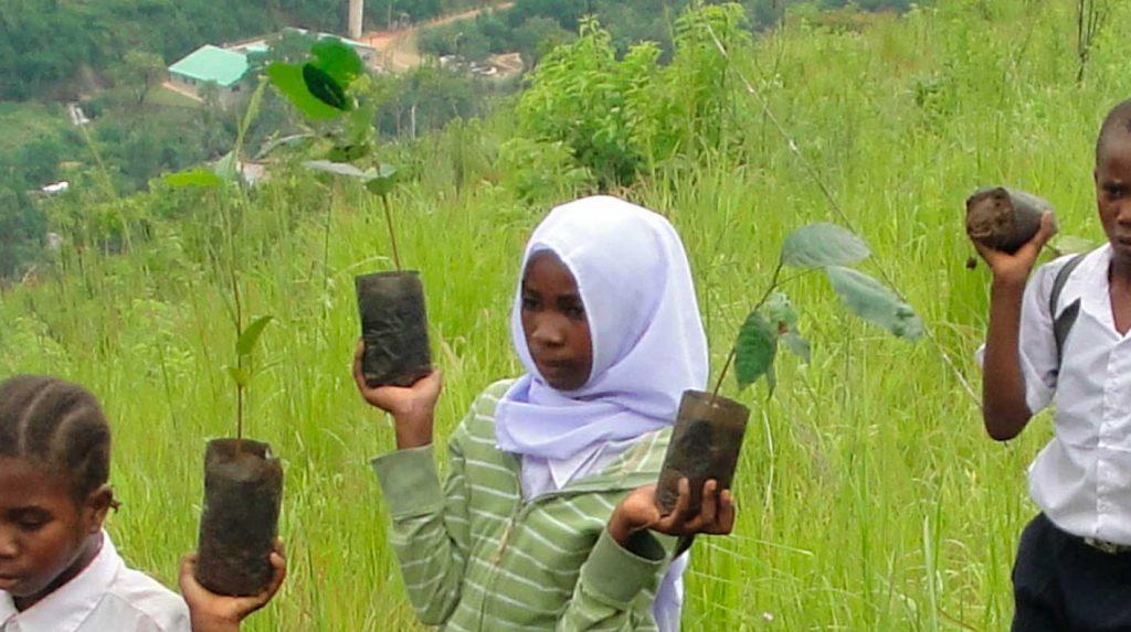 Afrikaner mit Baumsetzlingen