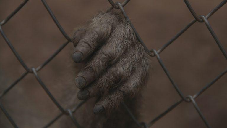 Eine durch den Zaun gesteckte Hand eines Affens
