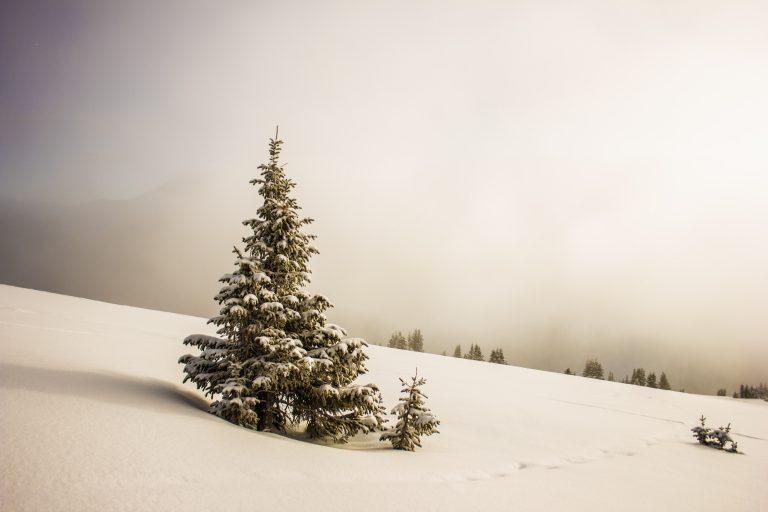 Verschneite Landschaft mit einer allein stehenden Tanne.