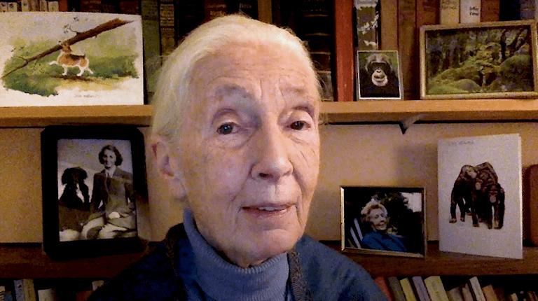 Videobotschaft Jane Goodall
