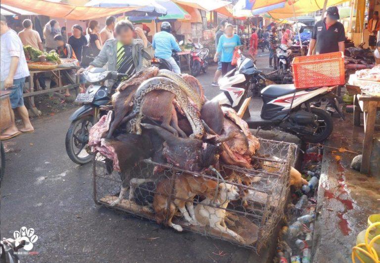 Käfig mit lebendigen und toten Tieren auf einem Wildtiermarkt.