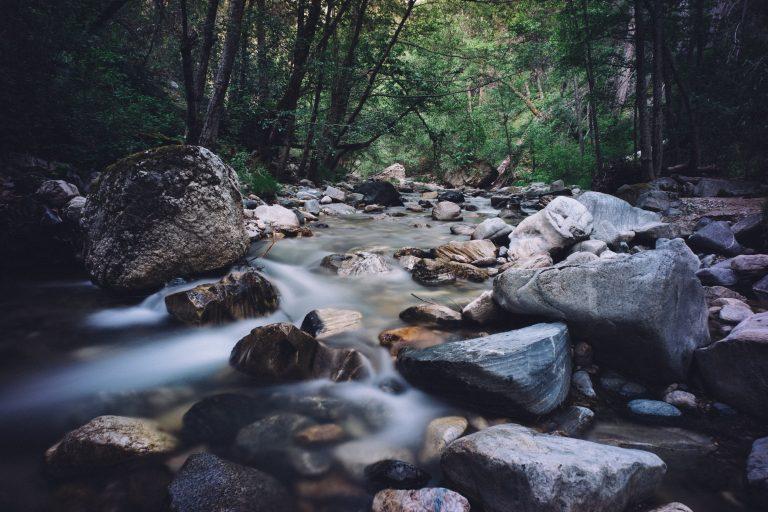 Steiniges Flußbett mit Bäumen